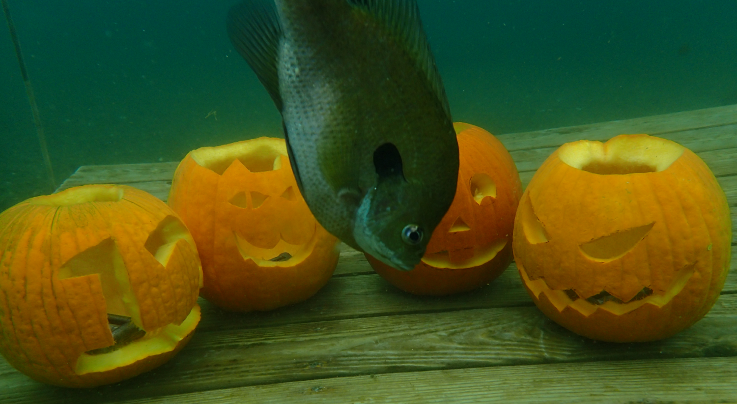 Celebrate Halloween With Blue Planet!